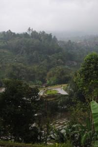La pioggia alimenta le risaie di Jatiluwih