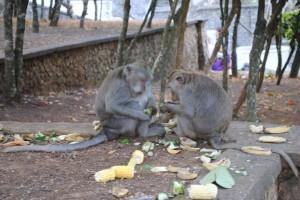 Scimmie sacre al Pura Luhur Uluwatu