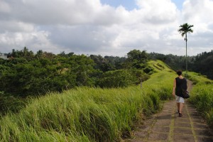 Ubud, verso le risaie